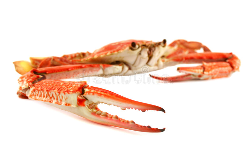 Cooked Blue Swimmer Crab. Cooked sand crab or blue swimmer crab ready for cracking and serving royalty free stock photo