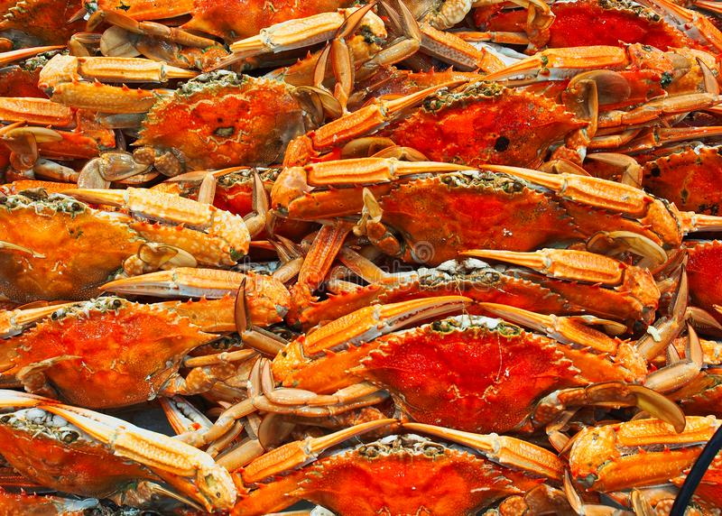 Cooked Blue Swimmer Crabs, Sydney Fish markets, Australia. Many fresh cooked bright orange coloured blue swimmer crabs for sale at the Sydney Fish Markets stock images