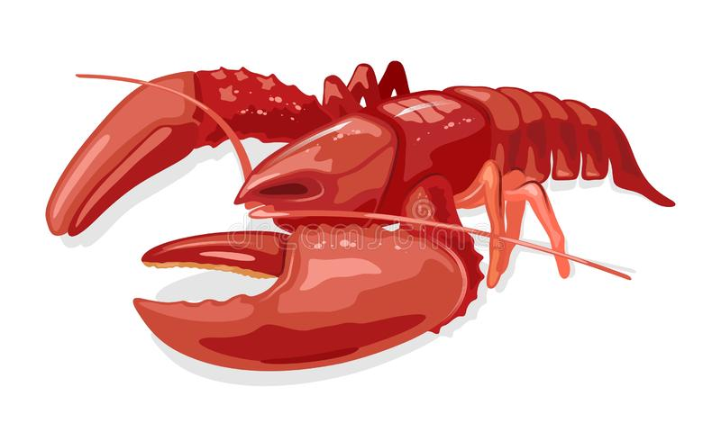 Cooked boiled red lobster or langouste. Seafood. Marine animal. Vector cartoon illustration isolated on white background for market label, food packing stock illustration
