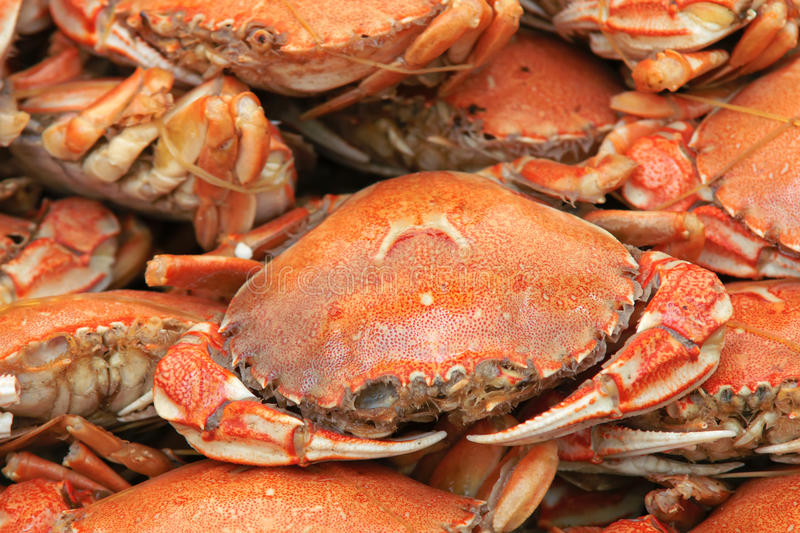 Cooked crab. The close-up of cooked crab stock photography