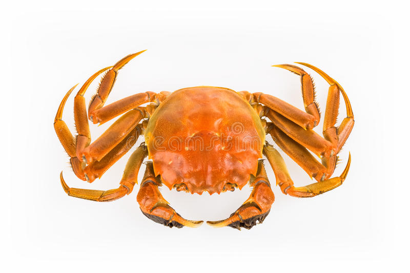 Cooked crab isolated royalty free stock image