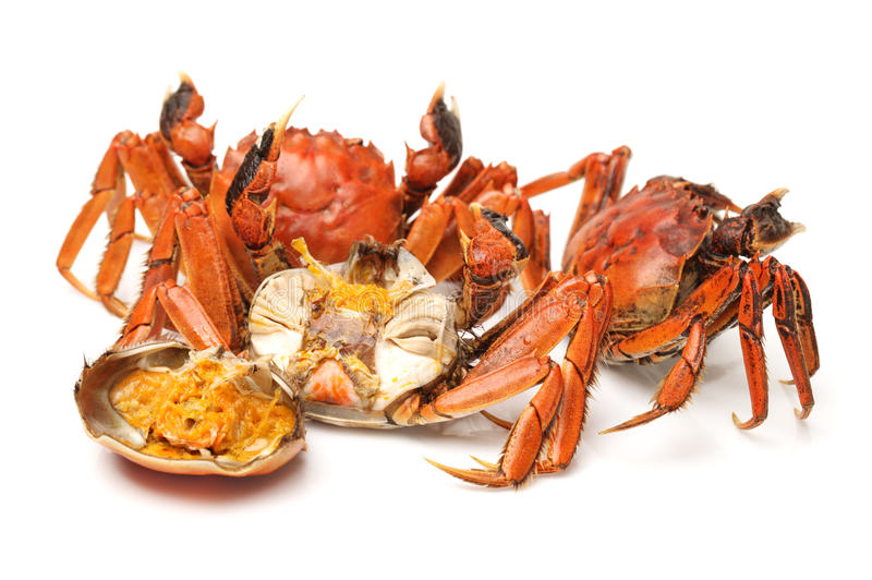 Cooked crab royalty free stock image