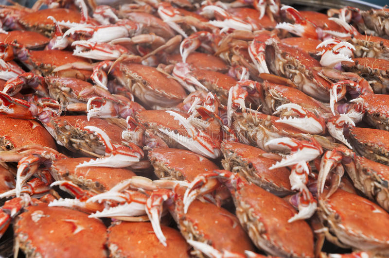Cooked Crabs. Steamed or boiled crabs, in the pot royalty free stock photography
