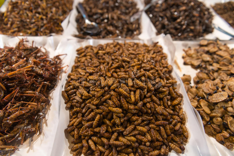 Cooked, Edible Insects and maggot for Human Consumption at a Pub. Wide assortment of edible, fried insects and maggot being sold at a public market in Southeast stock photography