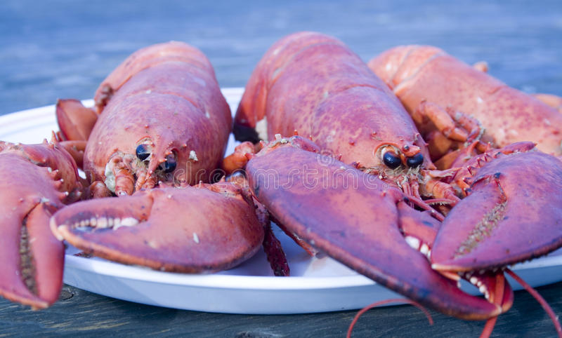 Download Cooked Lobster stock photo. Image of cooked, animal, claw - 20101310