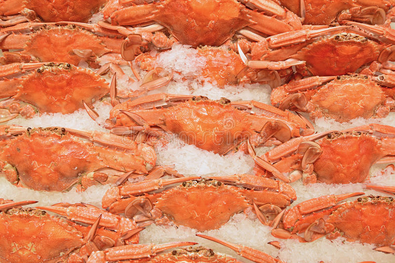 Cooked male blue swimmer crabs being arranged on crushed ice on display for sale at fish market. These delicious creatures, both voracious hunters and scavengers royalty free stock photos