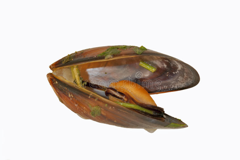 Download Cooked mussels stock image. Image of horizontal, seafood - 29005679