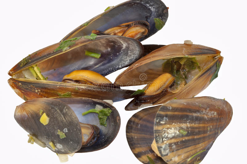 Download Cooked mussels stock image. Image of nobody, close, prepared - 29005703