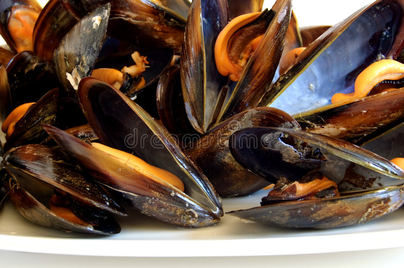 Download Cooked Mussels Royalty Free Stock Image - Image: 8551016