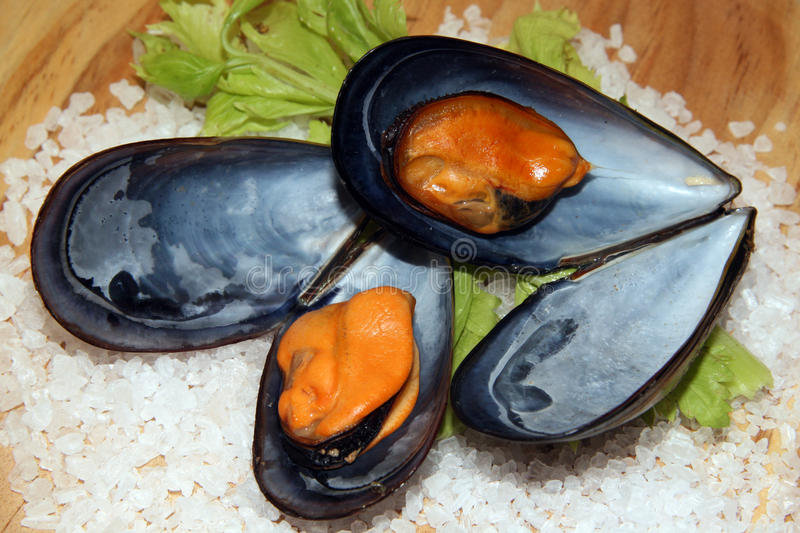 Cooked mussels. Mussels cooked to the steam on fresh lettuce and grains of fat salt royalty free stock photo