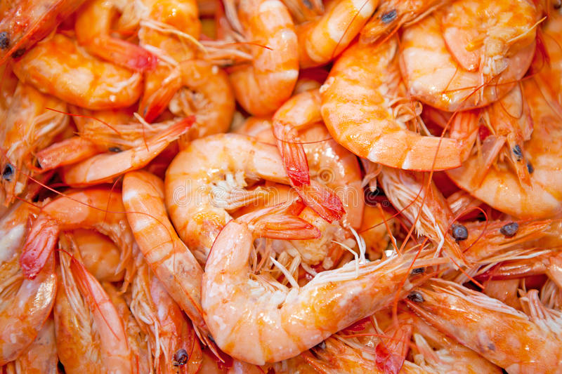 Cooked Shrimp Stock Photography