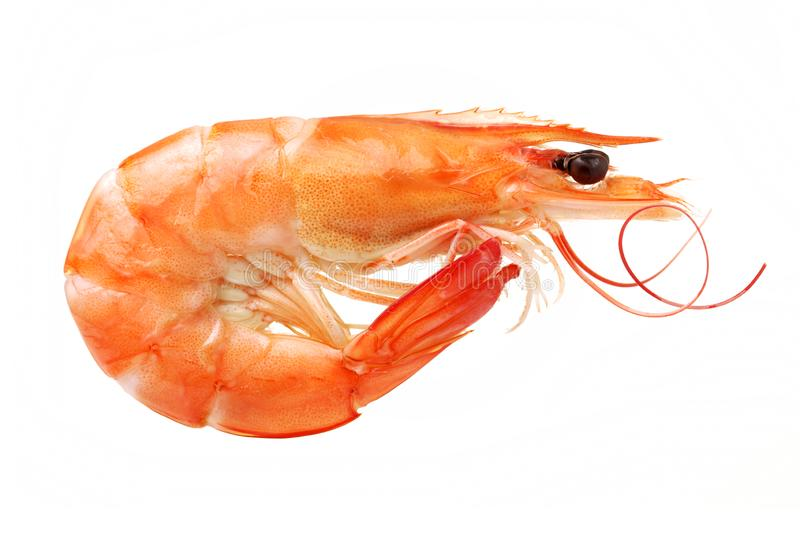 A cooked shrimp. Isolated on white background royalty free stock image