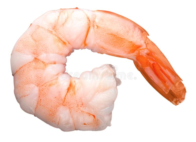 Cooked shrimp isolated on white background. Isolated cooked shrimp white background object closeup royalty free stock photo