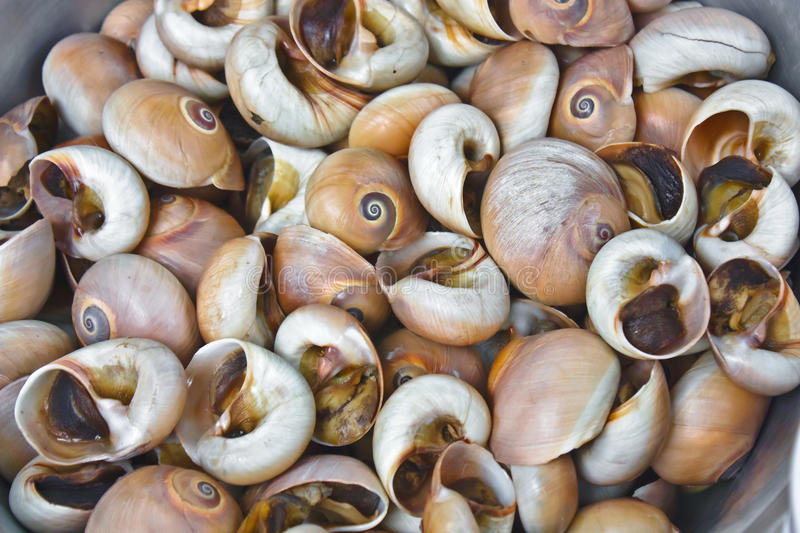 Download Cooked snails stock image. Image of strips, served, shell - 17358461