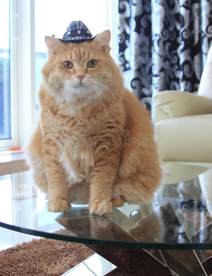Free Cookie Cat With Cowboy Hat Stock Photo - 49240710