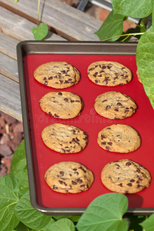 Download Cookies stock photo. Image of sweet, snack, chocolate - 21341784