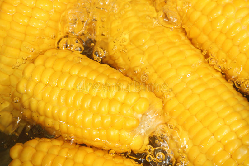 Download Cooking corn stock photo. Image of corn, vegetables, ripe - 20491736