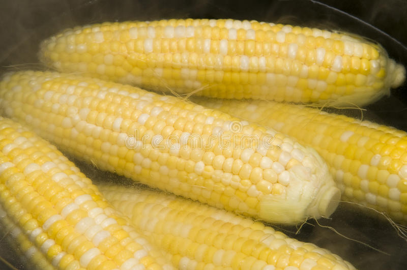 Download Cooking Corn stock image. Image of yummy, natural, cooking - 29394311