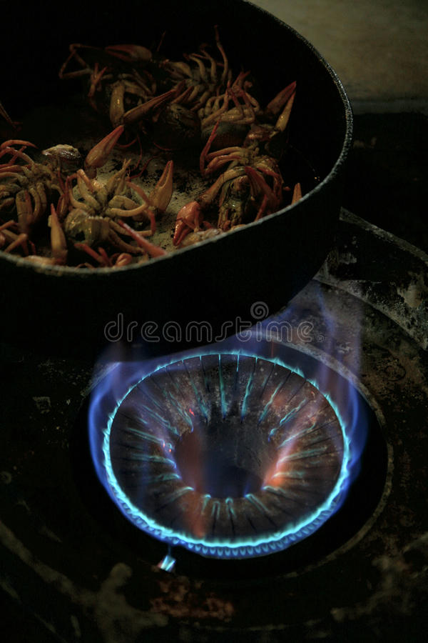 Download Cooking Crayfish On A Gaz Cooker Stock Photo - Image: 23706442