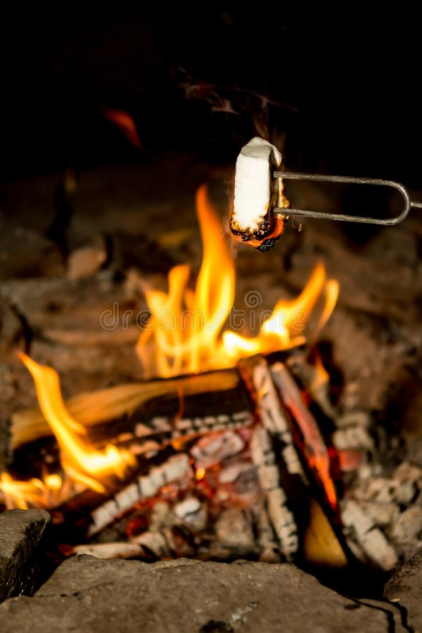 Cooking marshmallows on the camp fire. Cooking marshmallows for smores on a small camp fire while camping in New York royalty free stock photo