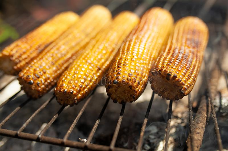 Cooking several fresh yellow brown golden corn cobs on open air barbecue grill, close up royalty free stock photo