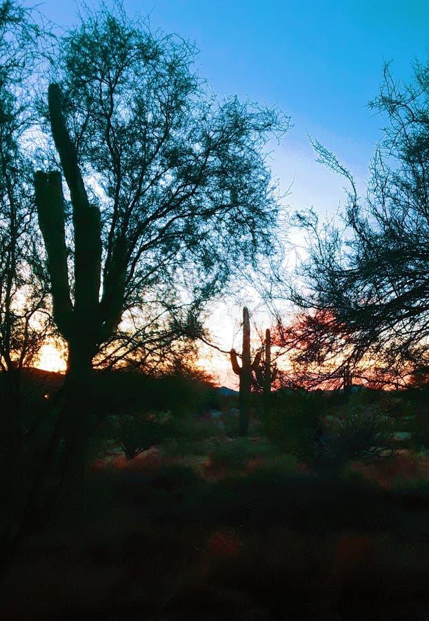 Cool breeze of  fall Sonoran twilight stock image