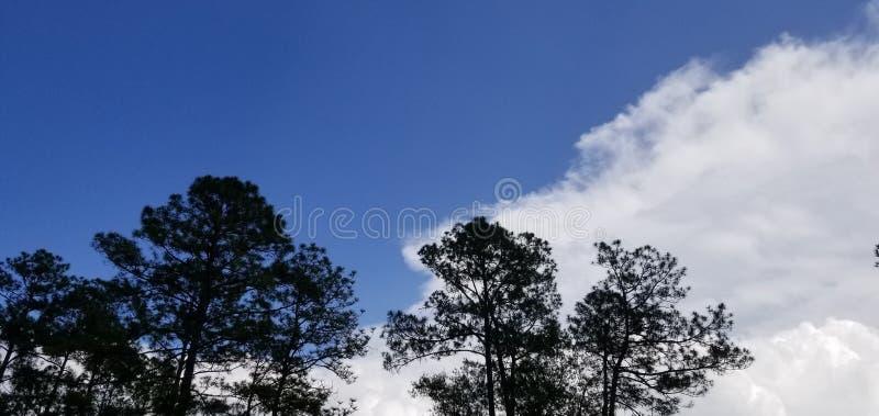 Cool Breezy Verão Tarde Parcialmente Nublado fotos de stock