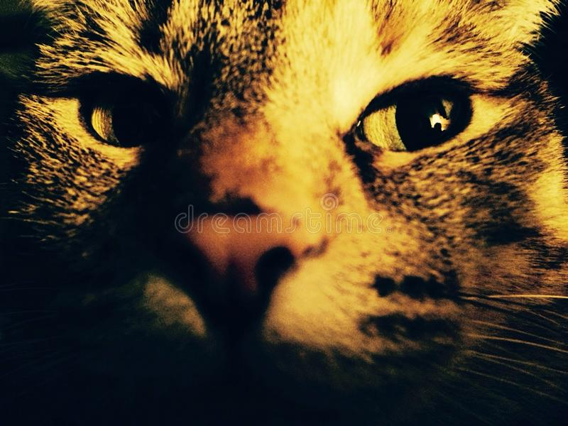 Cool Cat stock images