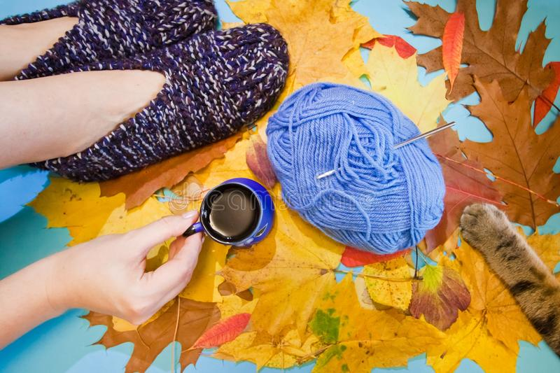 Cool creative flat lay with warm comfortable knitted slippers, a hand holding a cup of hot coffee, cat`s paw, Autumn yellow leaves. Cool creative flat lay with stock photography