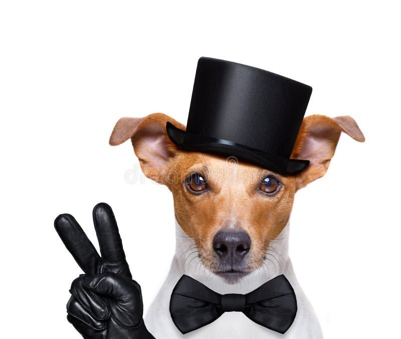 Cool curious dog looks at you stock photos