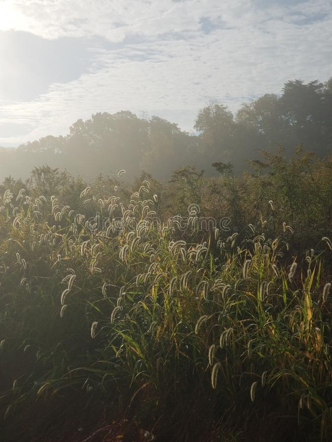 Cool dewy morning as the sun rises over the meadow stock image