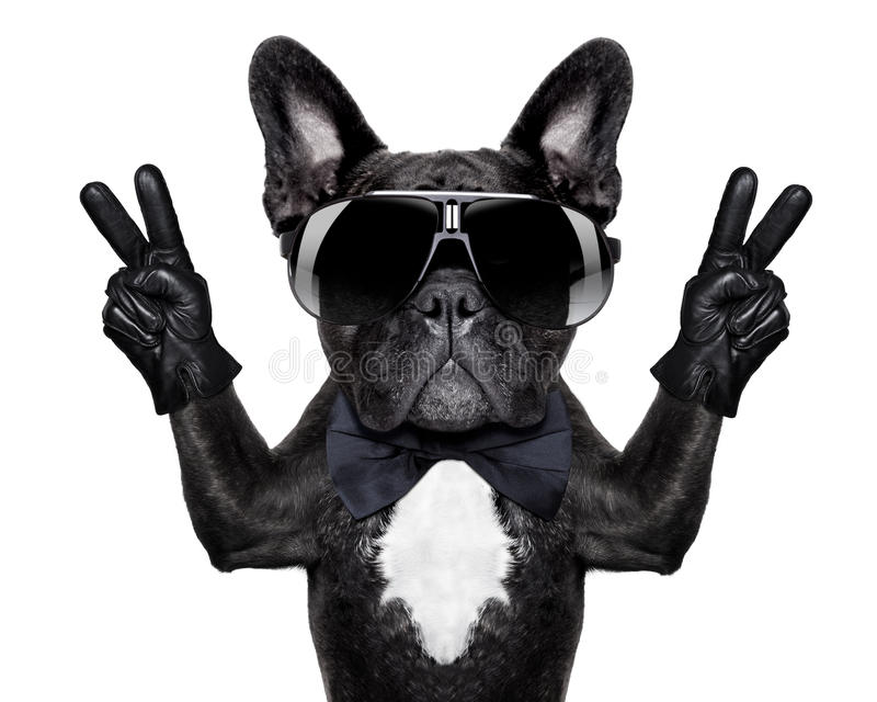 Cool dog. French bulldog with victory or peace fingers and black glasses