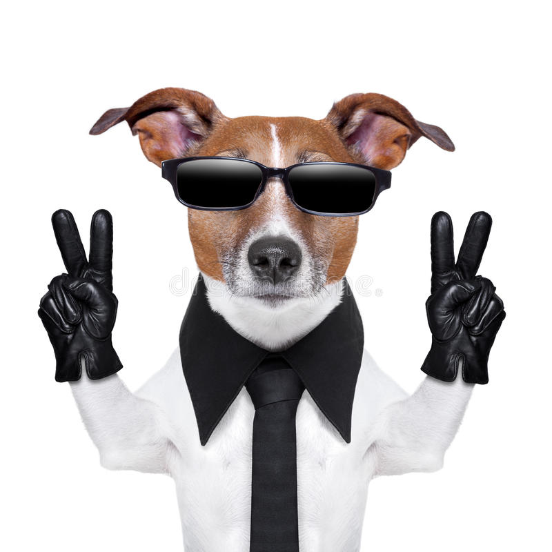 Cool dog. With peace fingers in black leather gloves