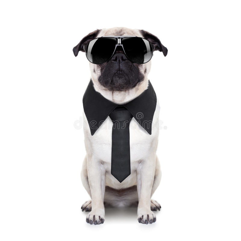 Cool dog royalty free stock photography
