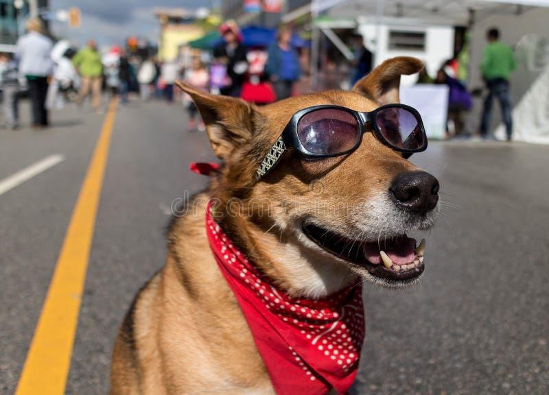 Cool dog on sunny urban street royalty free stock photos