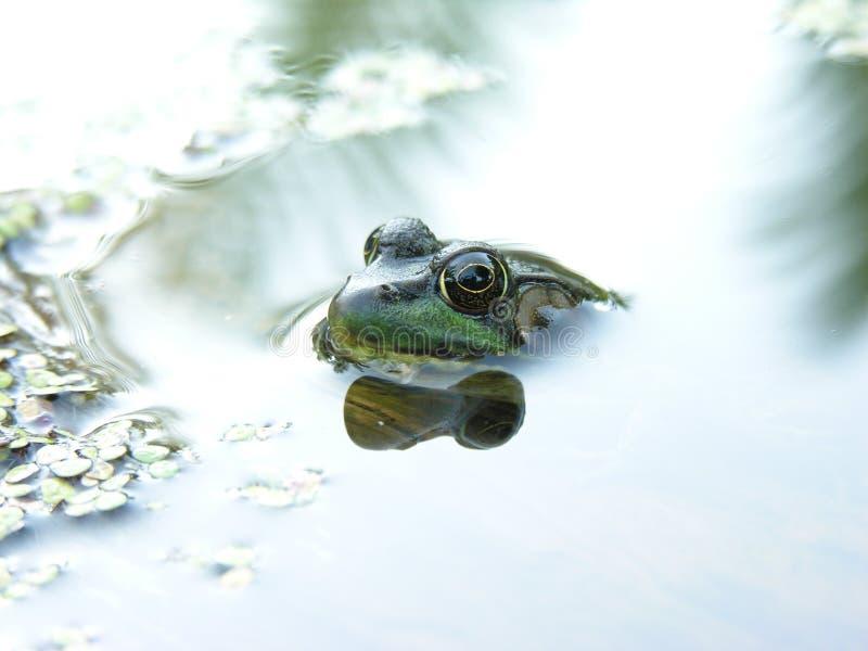 Download Cool Frog Shot Stock Photos - Image: 1050213