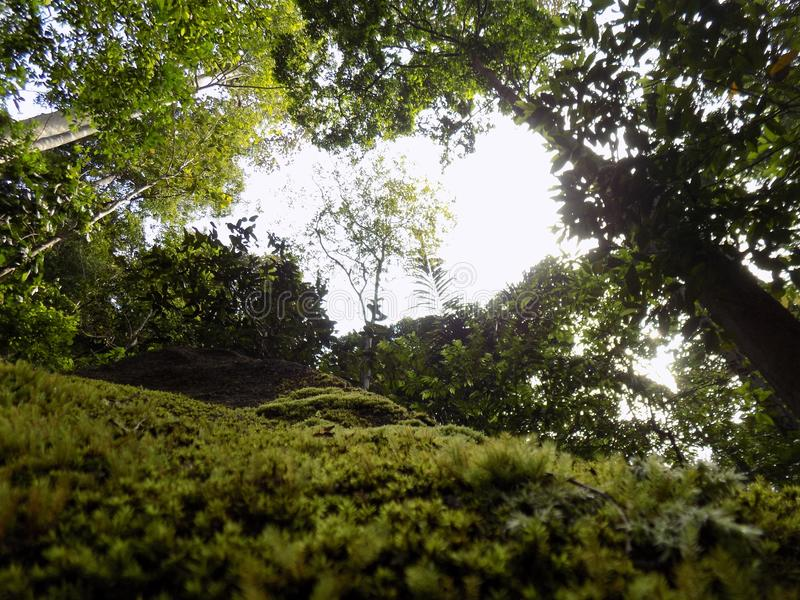Cool Green florest Jungle. Green on jungle or florest make us more cool and enjoy stock image