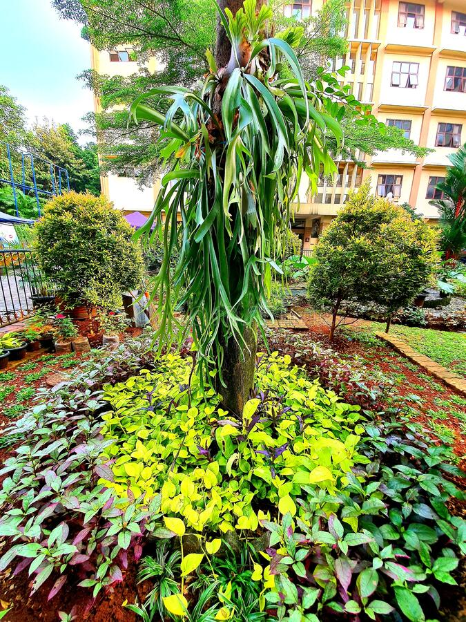 Cool green garden in the campus yard of Unindra PGRI in South Jakarta, Indonesia royalty free stock photo
