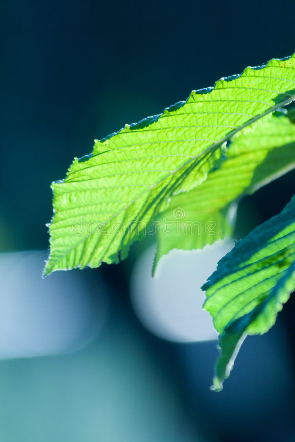 Cool green leafs. Photo of a green leaf with interesting texture and cool depht of field royalty free stock image