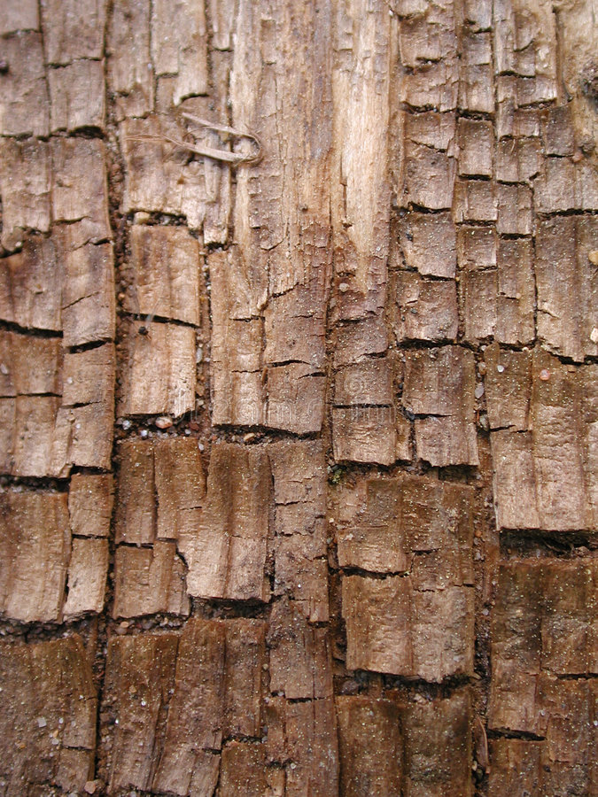 Cool Grunge Wood Bark Texture royalty free stock photo