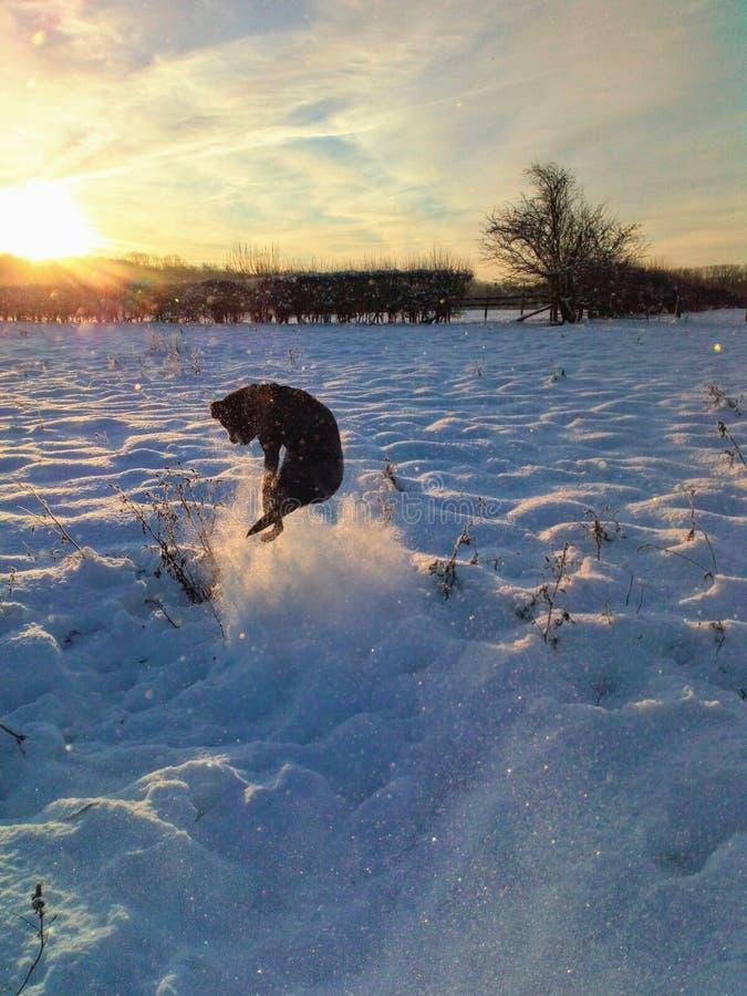 Snow lab stock photography