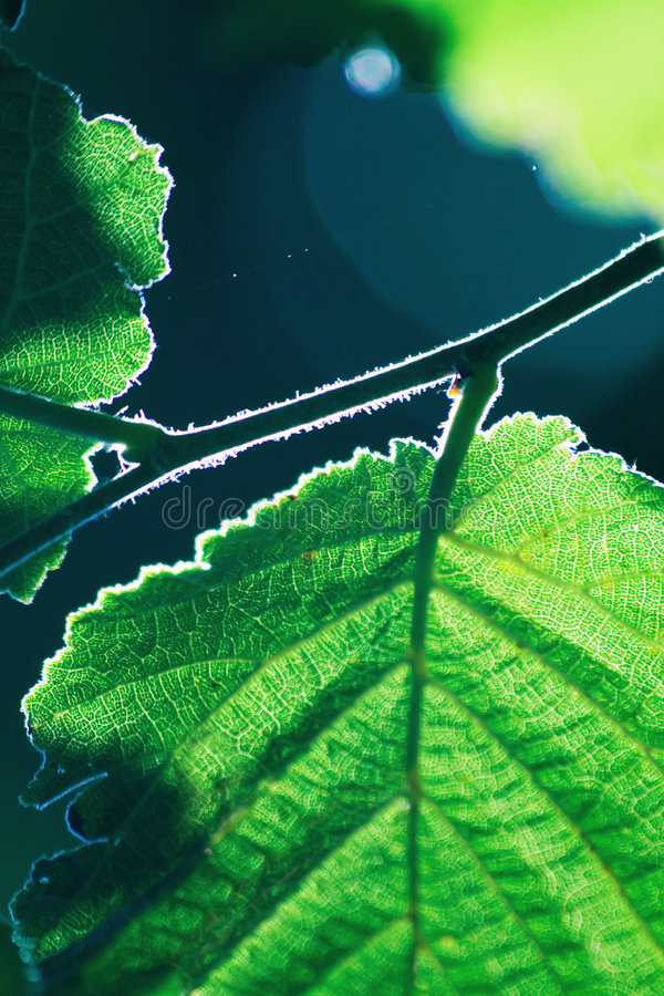 Cool leafs. Photo of a green leaf with cool detailed texture and good depht of field stock image