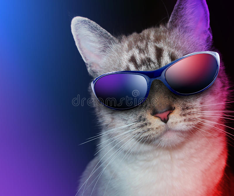 Download Cool Party Cat With Sunglasses Stock Photography - Image: 27051942