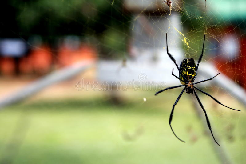 Download Cool spider stock image. Image of spider, cool, rest - 26655551