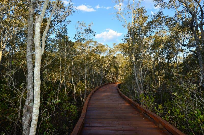 Coombabah Lakelands - Australie du Queensland photo libre de droits