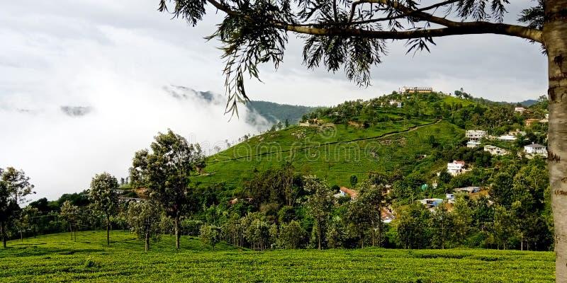 Coonoor, Tamil Nadu/Indien - Juli 2019: Nebelhafte Berge mit Teeplantage stockbild