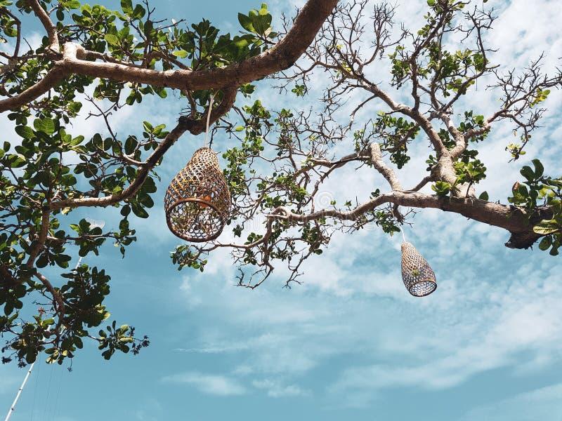 Coops lampen die decoratie op de boom hangen stock foto's