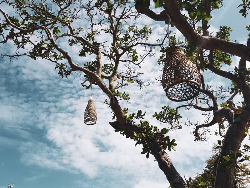 Coops le lampade che appendono le decorazioni sull'albero fotografie stock libere da diritti