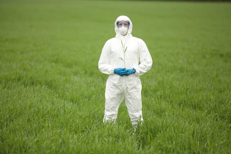 Coordenador da biotecnologia no campo de colheitas genetically alteradas - retrato foto de stock