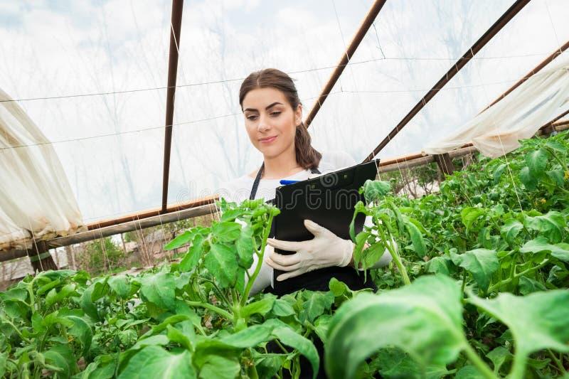 Coordenador fêmea novo da agricultura que inspeciona a planta imagem de stock
